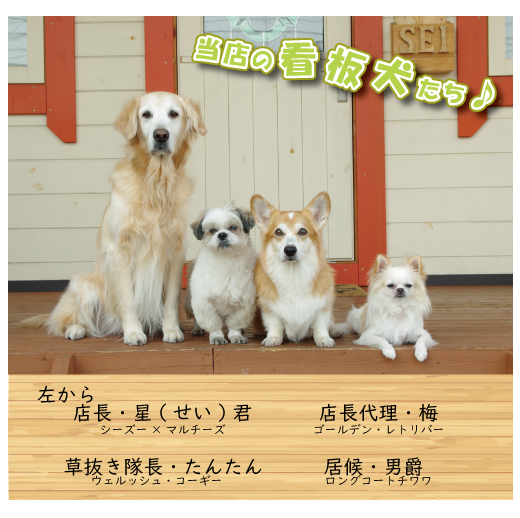 当店の看板犬たち