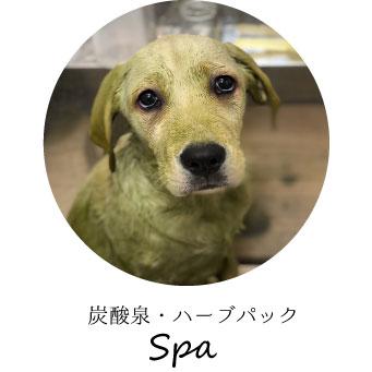 炭酸泉・Spa